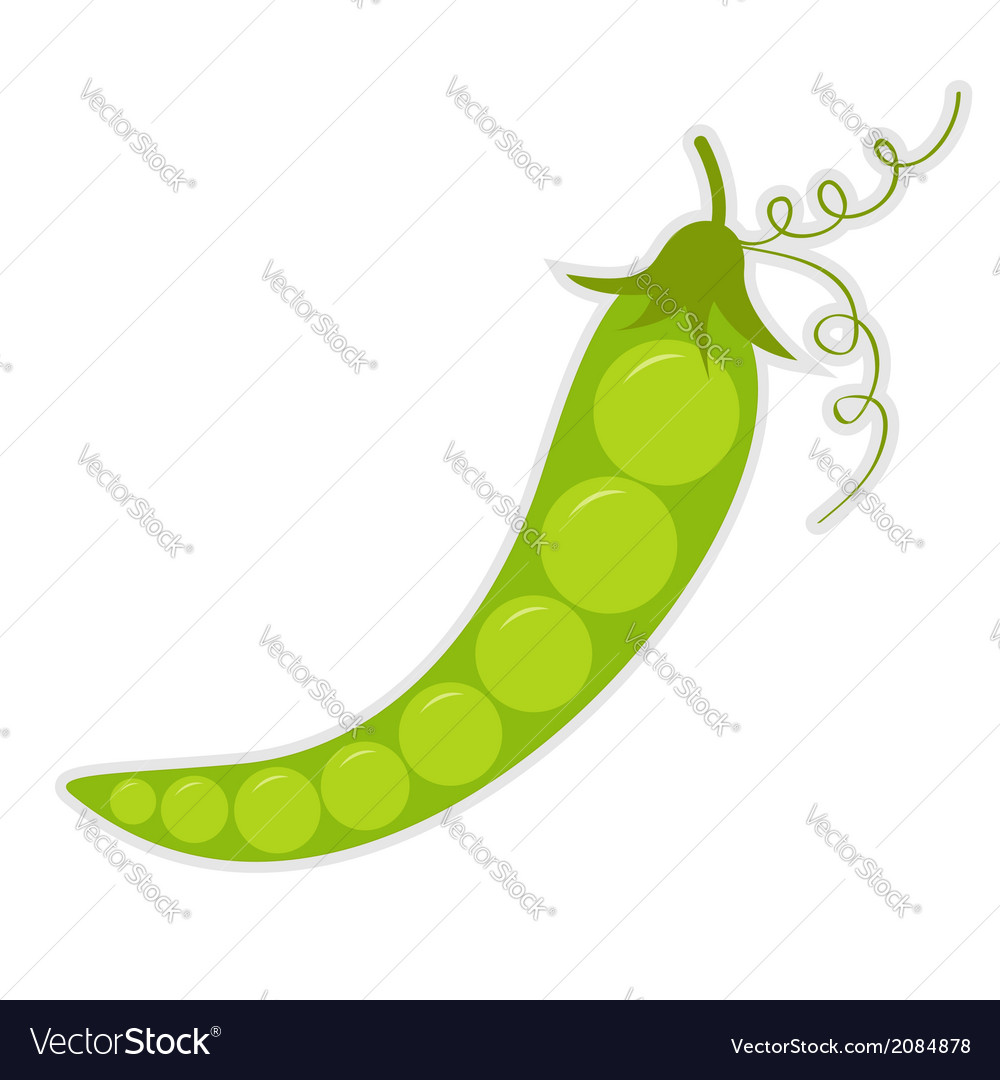 Green pea isolated vector | Price: 1 Credit (USD $1)