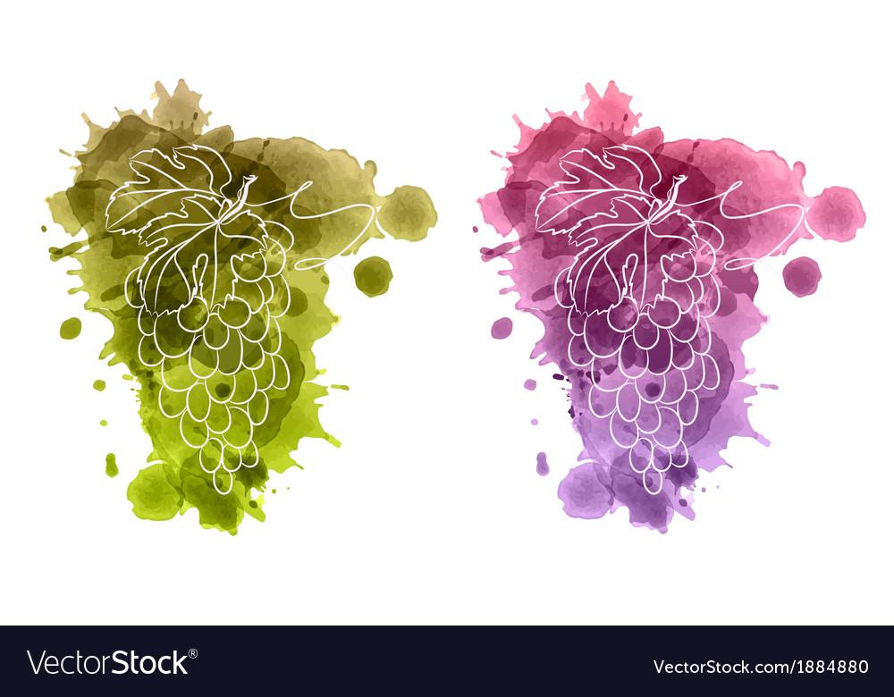 Watercolor of grapes vector | Price: 1 Credit (USD $1)