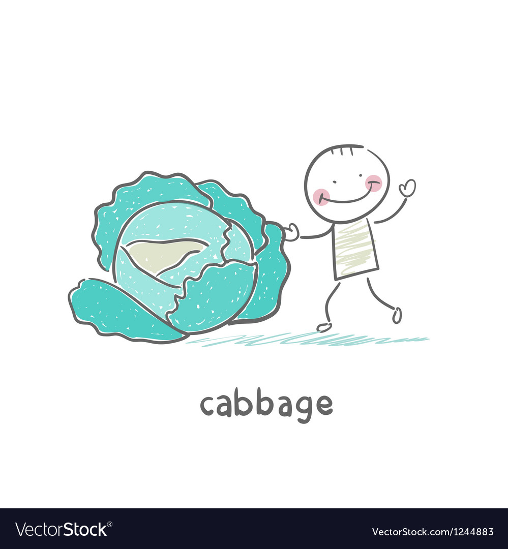 Cabbage and people vector | Price: 1 Credit (USD $1)