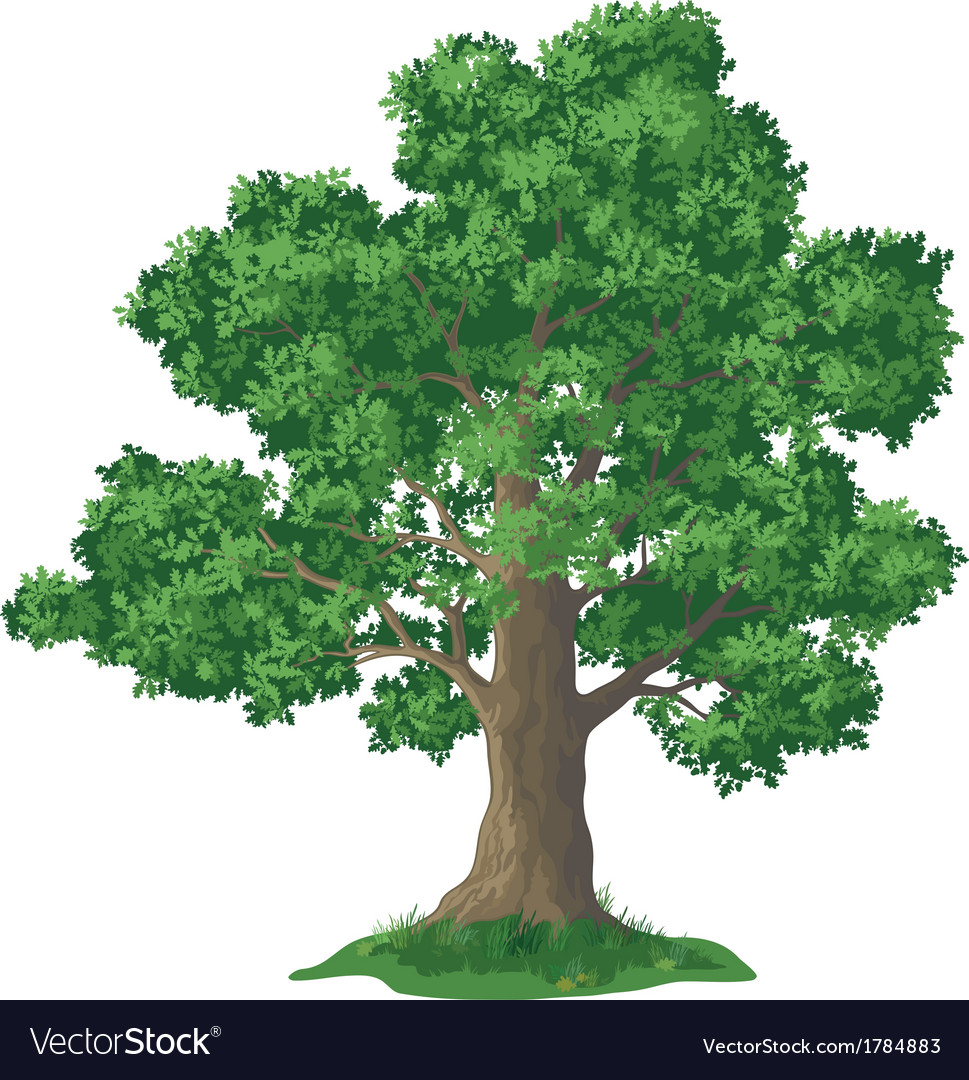 Oak tree and green grass vector | Price: 1 Credit (USD $1)