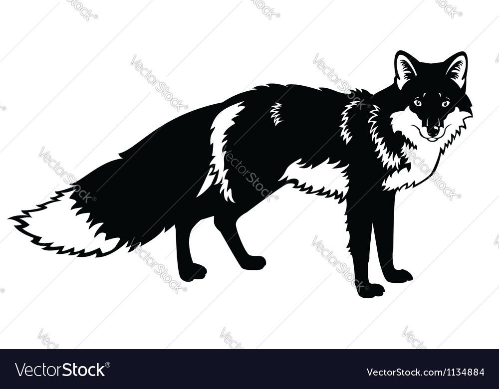 Standing fox black and white image vector | Price: 1 Credit (USD $1)