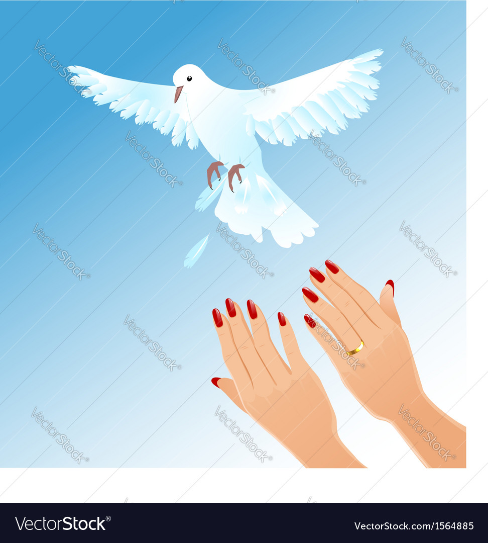 Hands of woman setting free white pigeon vector | Price: 1 Credit (USD $1)