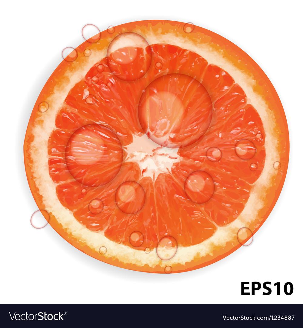 Fresh juicy grapefruit background vector   Price: 1 Credit (USD $1)
