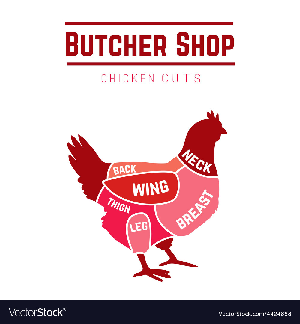 Cuts of chicken butcher diagram vector | Price: 1 Credit (USD $1)