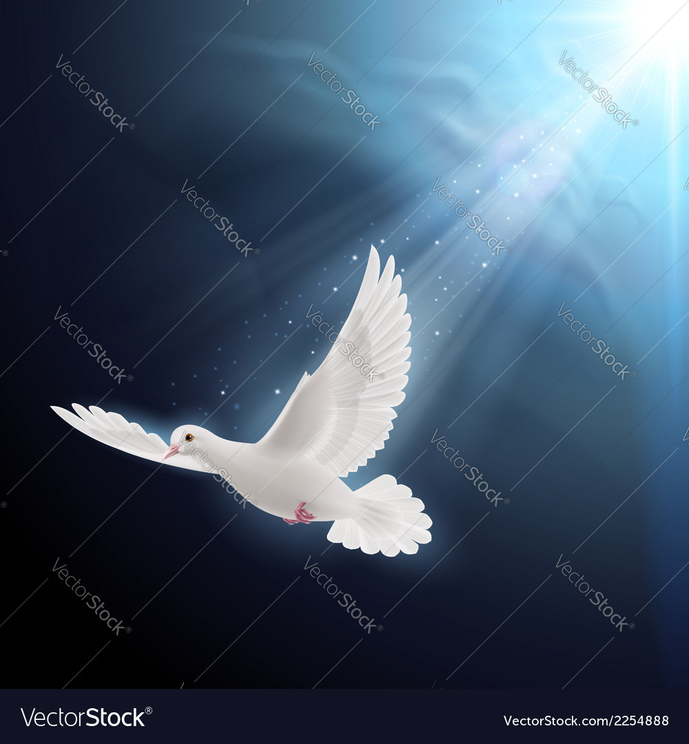White dove in sunlight vector | Price: 1 Credit (USD $1)