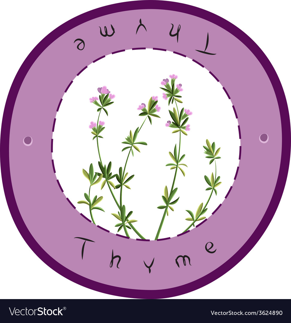 Fresh thyme vector | Price: 1 Credit (USD $1)