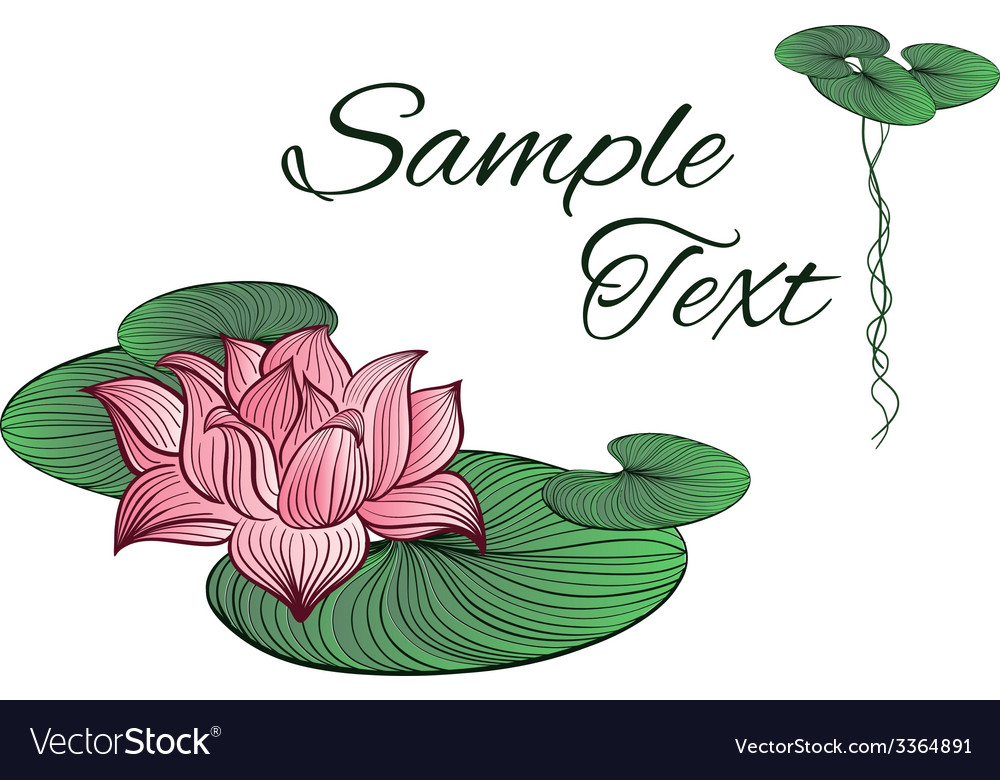 Pink lotus flower vector | Price: 1 Credit (USD $1)