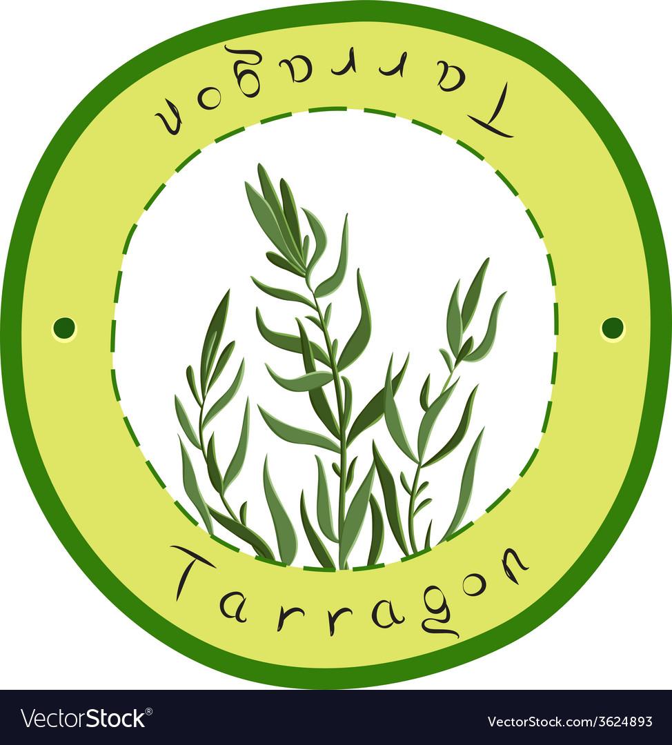 Tarragon vector | Price: 1 Credit (USD $1)