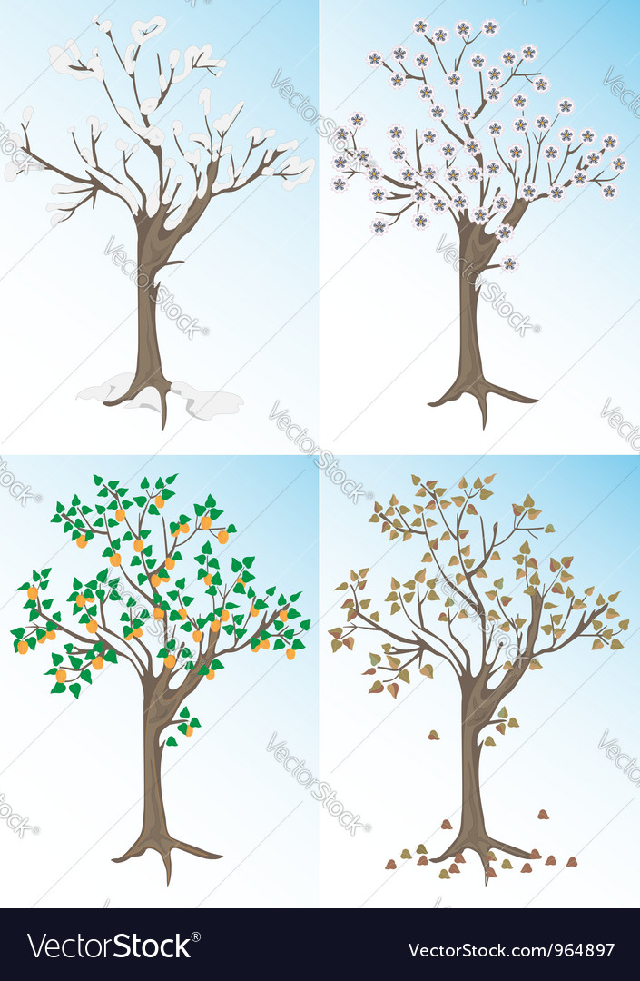 Apricot tree and the seasons vector | Price: 1 Credit (USD $1)