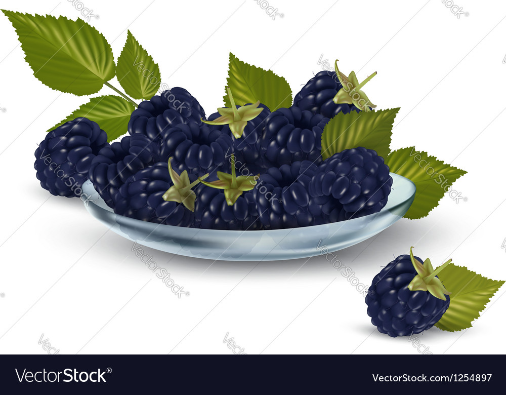 Background with blackberry vector | Price: 3 Credit (USD $3)