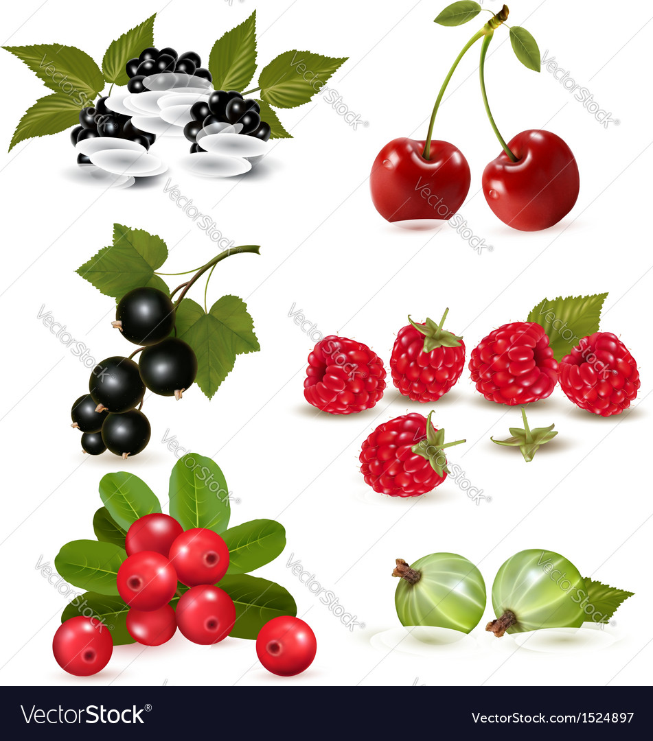 Big group of fresh berries and cherries vector | Price: 3 Credit (USD $3)