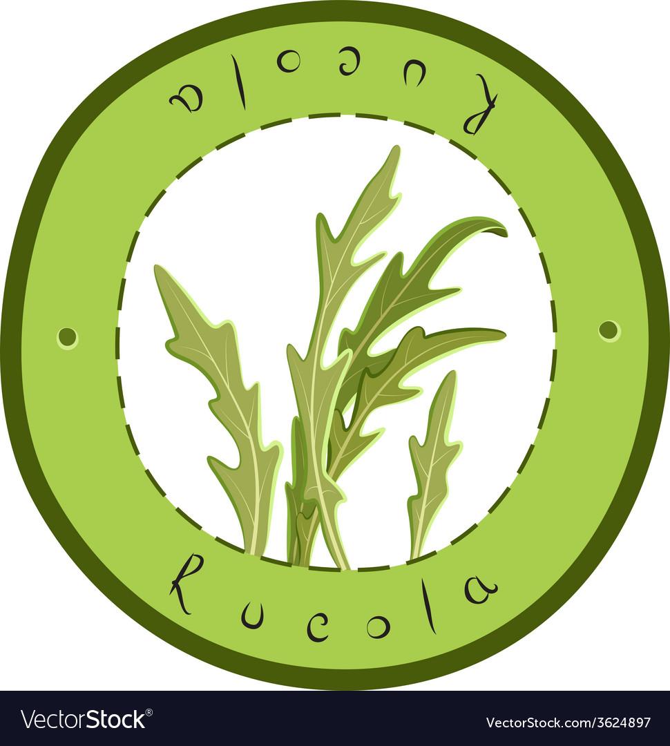 Fresh rucola vector | Price: 1 Credit (USD $1)