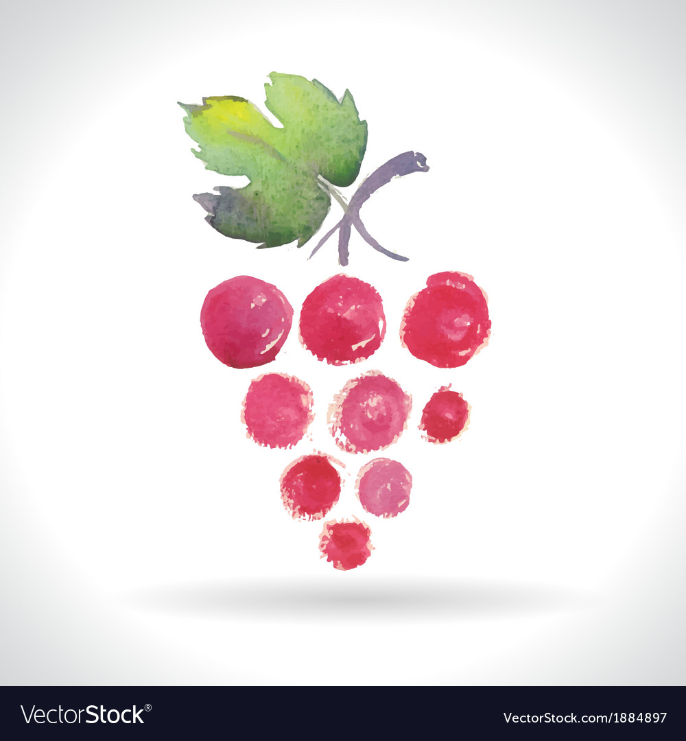 Watercolor of grapes vector | Price: 1 Credit (USD $1)