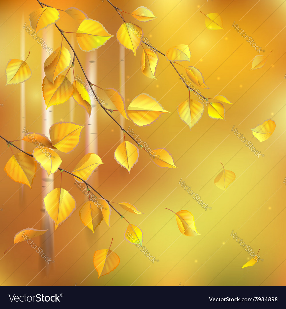 Birch leaves autumn vector | Price: 1 Credit (USD $1)