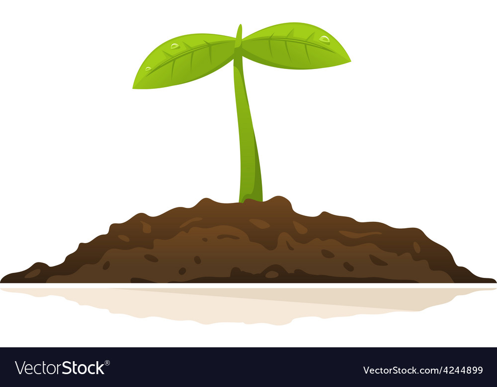 Growing plant vector | Price: 1 Credit (USD $1)