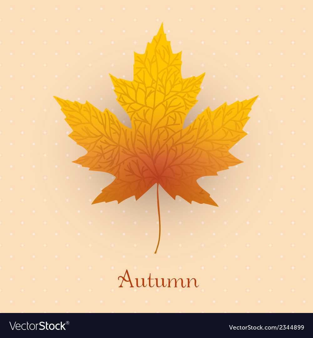 Maple leave with autumn banner vector | Price: 1 Credit (USD $1)