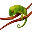 Green chameleon on white background vector