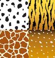 Pattern of animals vector