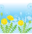 Summer postcard from dandelions vector