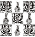 Pattern zebras for textiles vector