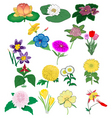 Set of detailed flowers vector