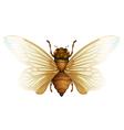 Generic cicada vector