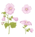 Flowers mallow isolated vector