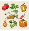 Color vegetables vector
