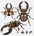 Stag beetle insect vector