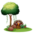A turkey near the rocks under the tree vector