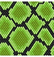 Green seamless pattern of reptile skin vector