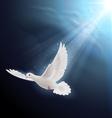 White dove in sunlight vector
