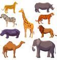 Africa animal decorative set vector