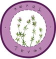 Fresh thyme vector