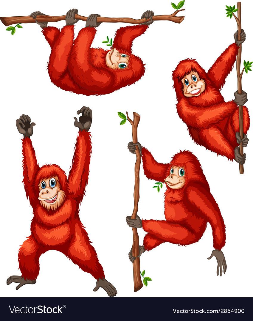 Orangutan vector   Price: 1 Credit (USD $1)