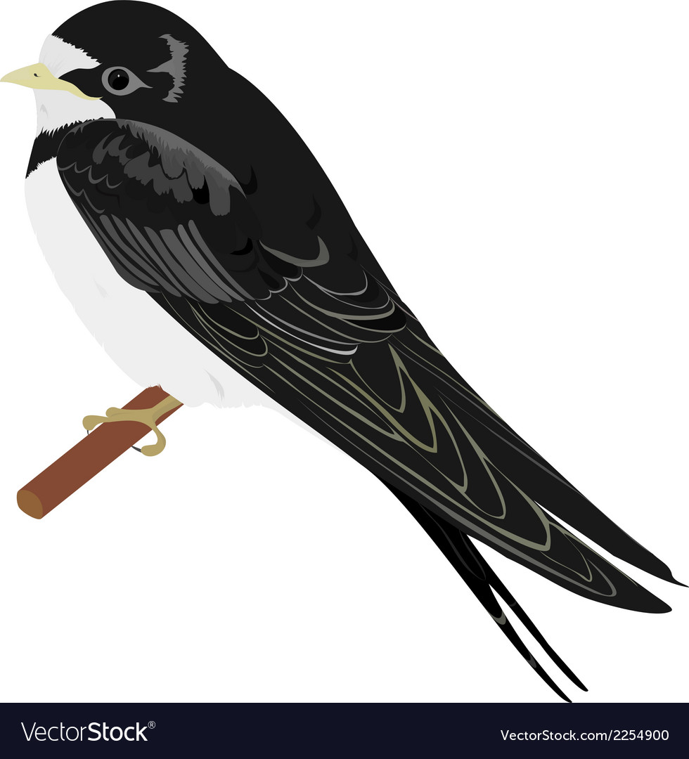 Swallow vector | Price: 1 Credit (USD $1)