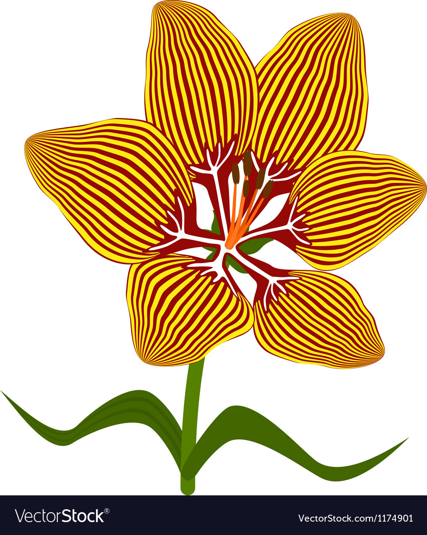 Fire lily flower vector | Price: 1 Credit (USD $1)