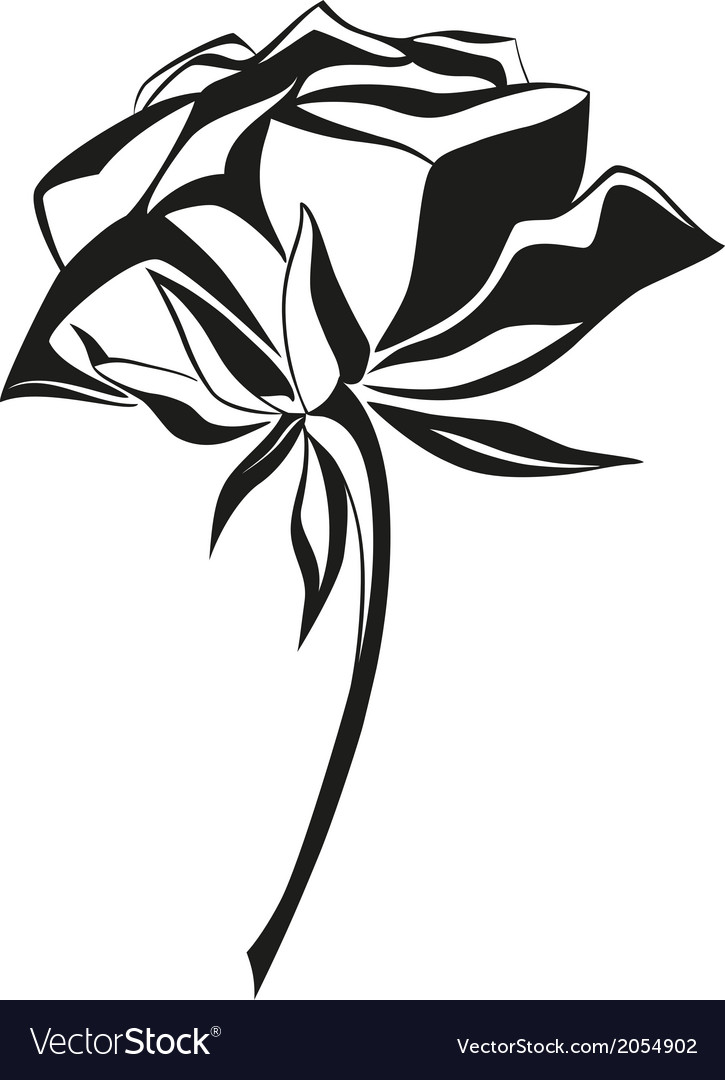 Black and white rose vector | Price: 1 Credit (USD $1)