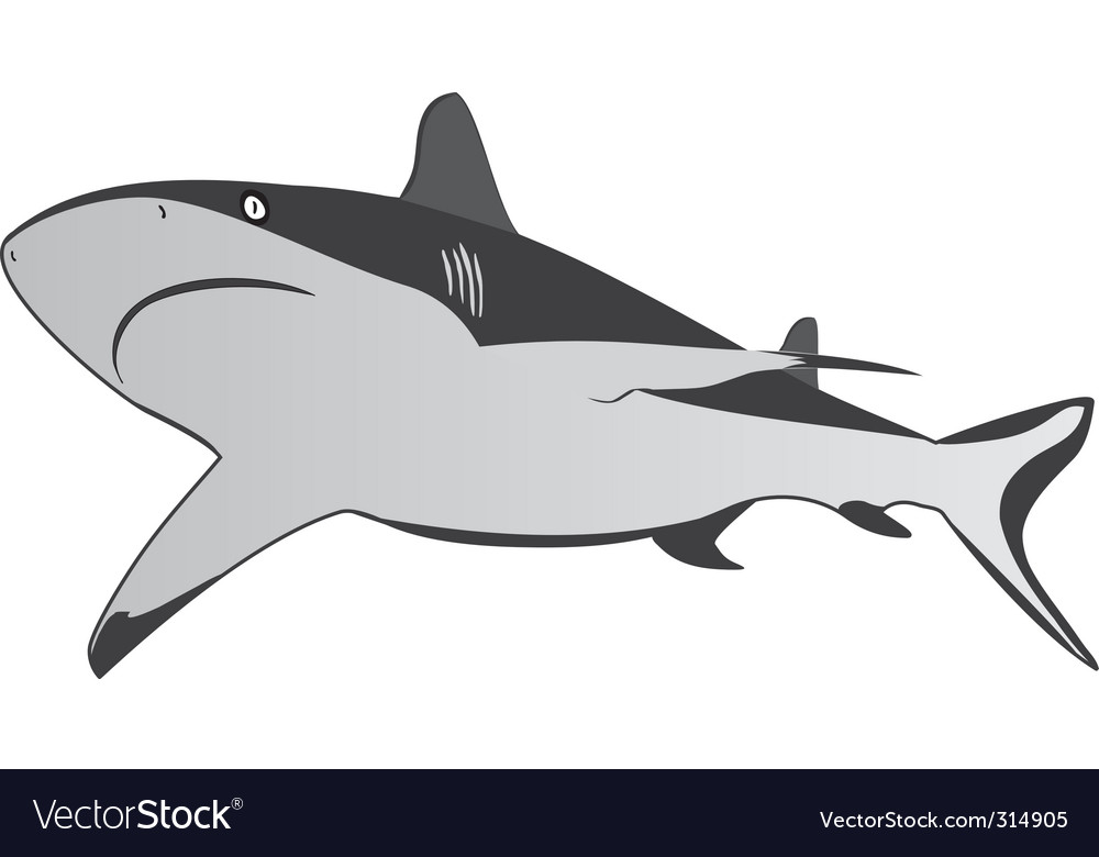 Shark  dangerous sea predator vector | Price: 1 Credit (USD $1)
