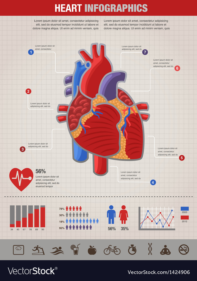 Human heart health disease and attack infographic vector | Price: 1 Credit (USD $1)