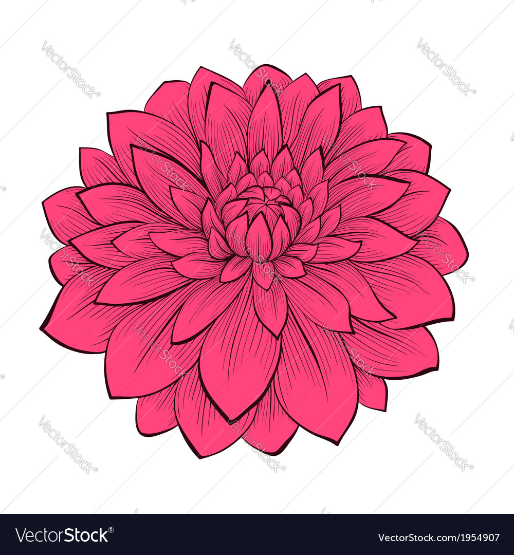 Flower dahlia drawn in graphical style contours vector | Price: 1 Credit (USD $1)