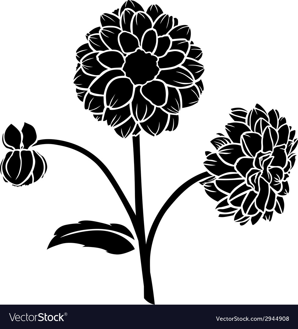 Dahlia flower vector | Price: 1 Credit (USD $1)