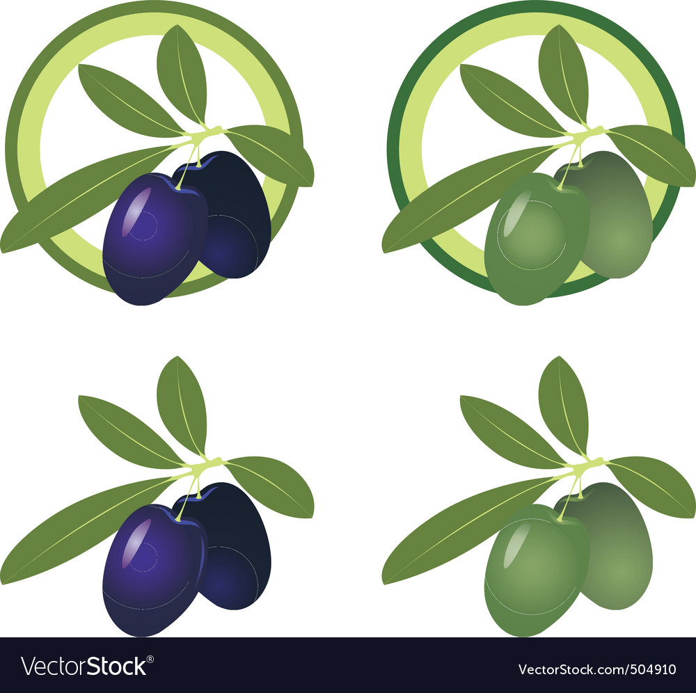 Olives icon vector | Price: 3 Credit (USD $3)