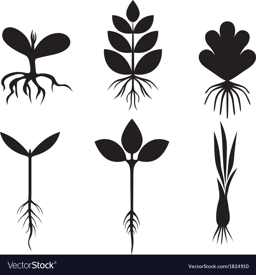 Sprout set vector | Price: 1 Credit (USD $1)