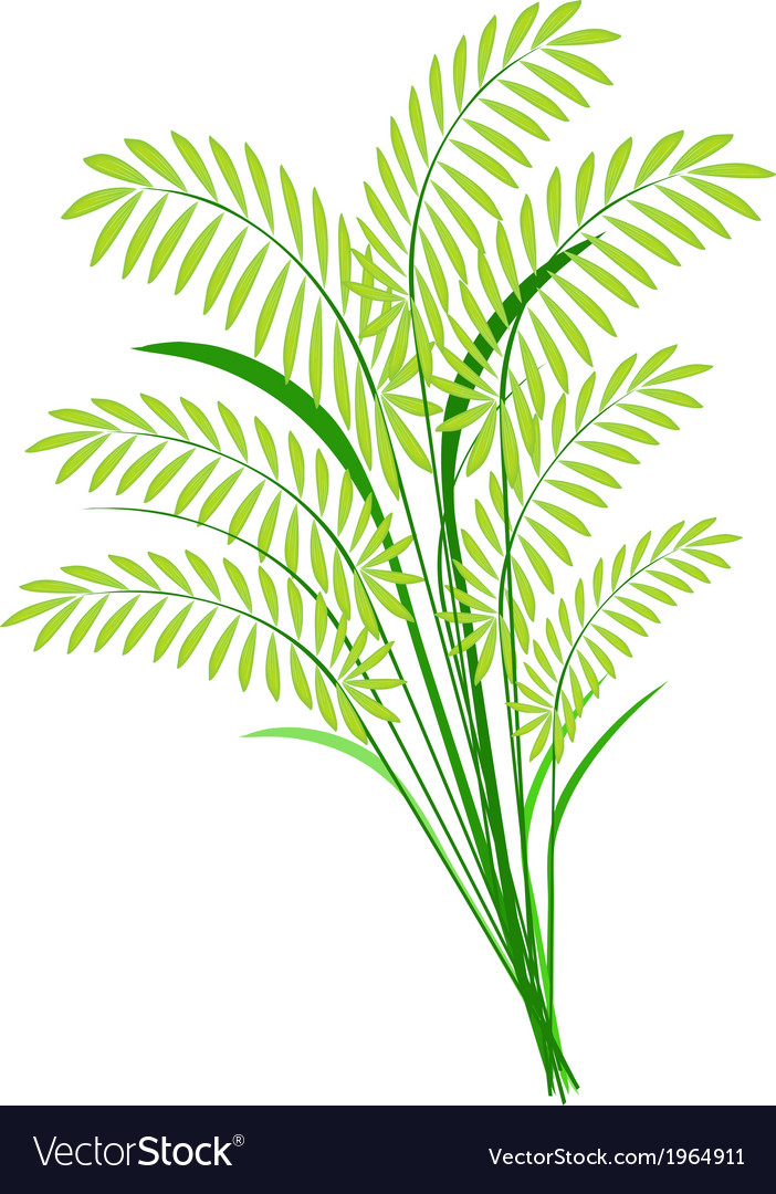Cereal plants or ferns leaves on white background vector | Price: 1 Credit (USD $1)