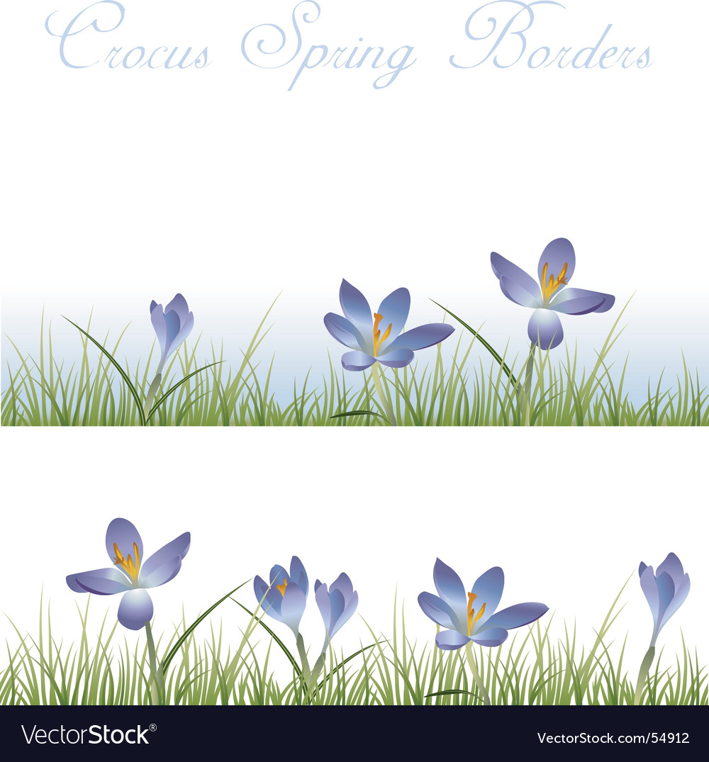 Crocus borders vector | Price: 1 Credit (USD $1)