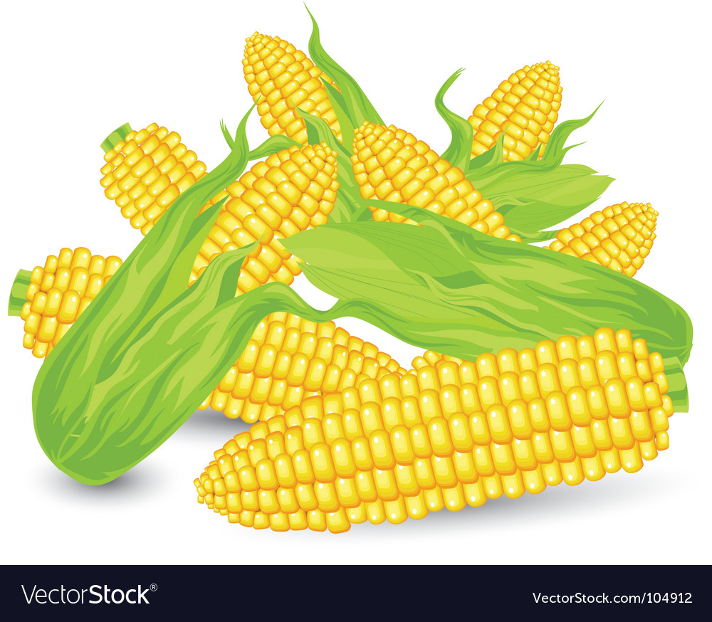 Hill ears of ripe corn vector | Price: 1 Credit (USD $1)