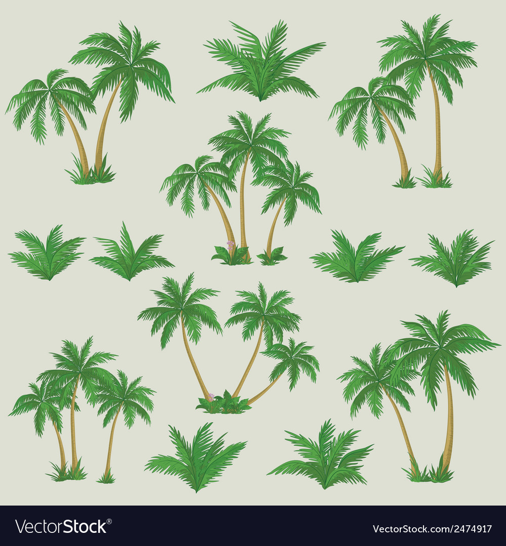 Tropical palm trees set vector | Price: 1 Credit (USD $1)