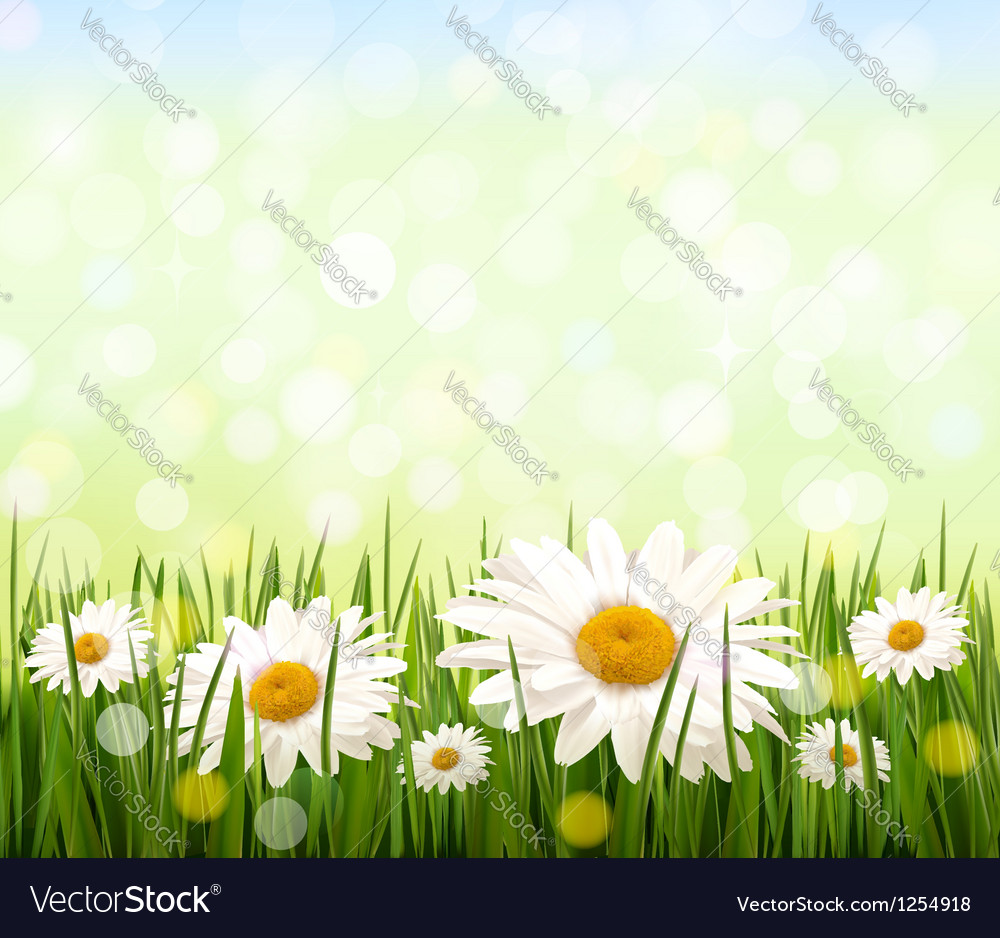 Nature background with green grass and daisies vector | Price: 3 Credit (USD $3)