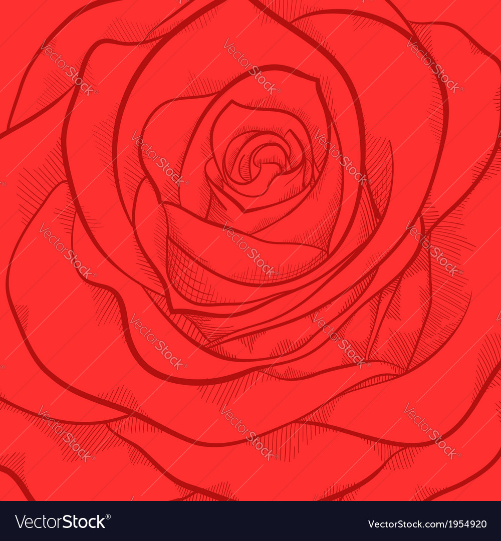 Beautiful background with red rose close-up vector | Price: 1 Credit (USD $1)